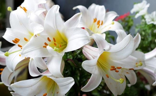 Noms des fleurs pour un mariage et signification