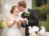 Comment organiser un lâcher de colombes pendant un mariage, quel tarif ?